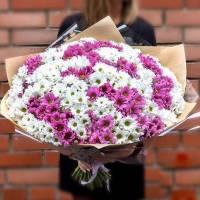 Букет 51 ветка хризантемы R015
